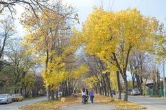 Goldener Herbst Stockfotos
