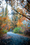 Goldener Herbst auf der Straße Stockbild