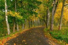 Goldener Herbst in einem nassen Park lizenzfreies stockbild