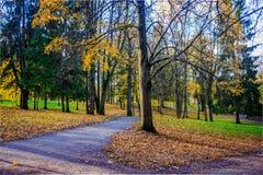 Goldener Herbst in Gatchina-Park stockbild