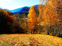 Goldener Herbst, gelbes Blatt überall Stockfotos