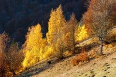 Goldener Herbst im Berg Lizenzfreies Stockfoto