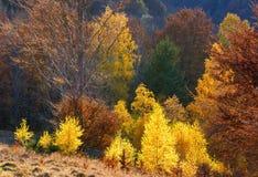 Goldener Herbst im Berg Stockfotografie