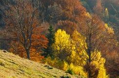 Goldener Herbst im Berg Stockbild