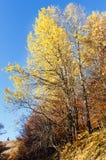 Goldener Herbst im Berg Stockfoto