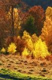 Goldener Herbst im Berg Lizenzfreie Stockbilder