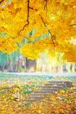 Goldener Herbst im Wald Stockfoto