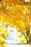 Goldener Herbst im Wald Stockfotografie
