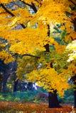 Goldener Herbst im Wald Stockfotos