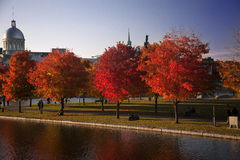 Goldener Herbst in Montreal Stockbilder