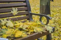 Goldener Herbst Schöne Ahornblätter auf einer Bank Stockfotografie