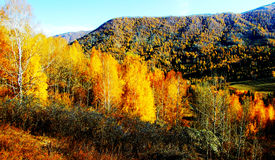 Goldener Herbst, schöner Gebirgswald Lizenzfreie Stockbilder