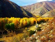 Goldener Herbst, schöner Gebirgswald Stockfoto