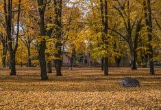 Goldener herbstlicher Park Lizenzfreies Stockbild