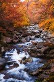 Goldener Herbstsaisonwald Stockfoto