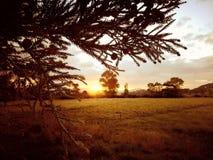 Goldener Himmel stockfotos