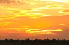 Goldener Himmel am Abend. Lizenzfreie Stockbilder