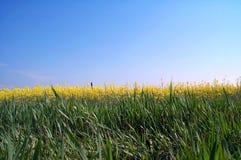 Goldener Horizont stockbilder