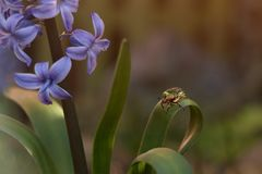 Goldener Käfer im Frühjahr Stockfotografie