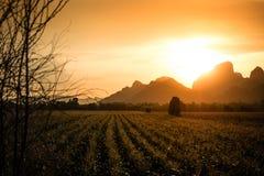 Goldener Mais-Bauernhof Lizenzfreie Stockfotos
