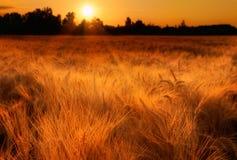 Goldener Morgen Stockfotos
