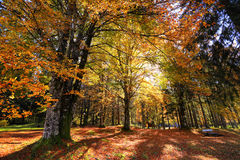 Goldener Park des sonnigen Herbstes mit Bank in Slowenien Stockfotos