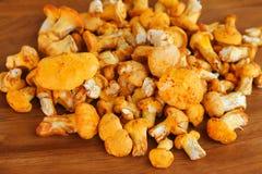 Goldener Pfifferling (gelbe Pilze) Stockfotos