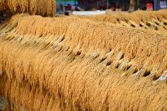 Goldener Reis Lizenzfreie Stockfotos