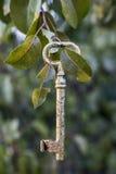 Goldener Schlüssel auf Birnenbaum lizenzfreies stockfoto