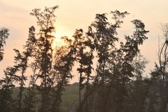 Goldener Sonnenaufgang über Hügeln und Reihe von Casuarina - pfeifende Kiefer Stockbild