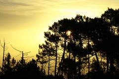 Goldener Sonnenaufgang über Schattenwaldland Lizenzfreies Stockfoto