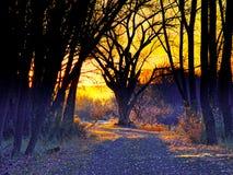 Goldener Sonnenaufgang im Wald lizenzfreie stockfotografie