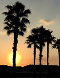Goldener Sonnenaufgang Orlando Floridas hinter silhouettierten Palmen Stockbilder