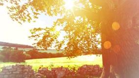Goldener Sonnenuntergang-Baum-Hintergrund Stockfoto