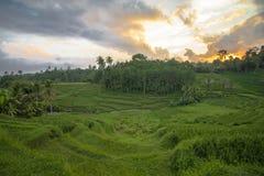 Goldener Sonnenuntergang bei Jatiluwih Bali stockfoto