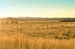 Goldener Sonnenuntergang in der afrikanischen Savanne Stockbild