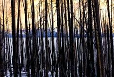 Goldener Sonnenuntergang durch vertikale Baum-Kabel stockbilder
