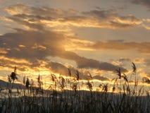 Goldener Sonnenuntergang-Himmel in Clark County Wetlands Park, Las Vegas, Nevada stockfoto