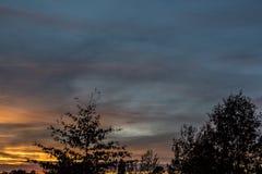 Goldener Sonnenuntergang und schwarze Bäume Lizenzfreie Stockfotografie