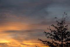 Goldener Sonnenuntergang und schwarze Bäume Stockfoto