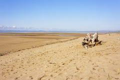 Goldener Strand mit Treibholzklotz stockfoto