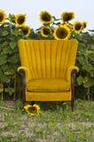 Goldener Stuhl und Sonnenblumen Stockbilder