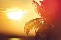Goldener Stundenhimmel des Sonnenuntergangs mit Sonne über Berg und Palmblatt für Retro- Ton des Sommerferien-Hintergrundes lizenzfreies stockbild