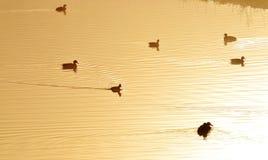 Goldener Teich Stockfoto