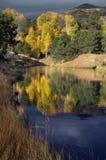 Goldener Teich lizenzfreie stockfotografie