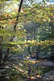 Goldener und roter Autumn Leaves Decorate Cleveland MetroParks stockfoto