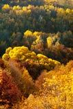 Goldener Wald Lizenzfreie Stockfotografie