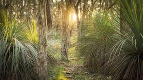Goldener Wald Stockfotos