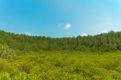 Goldener Wald Lizenzfreies Stockbild