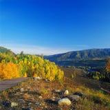 Goldener Wald im Sonnenaufgang Stockfotos